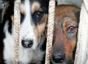 1370421090_homeless-animals