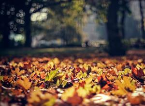 osen_listya_listopad_klen_park
