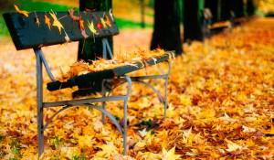 banco-lleno-de-hojas-de-otono-paisajes-de-parque-3852