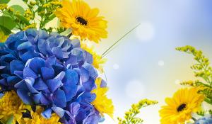 cvety-zheltye-yarko-priroda-nebo