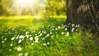 pomlad_drevo_travnik_roze