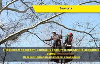 obrizka-derev-u-ternopoli-2020