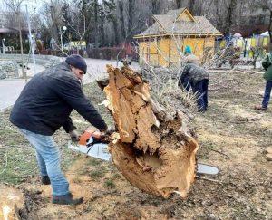 vidalennya-derev-u-ternopilskih-parkah-300x243