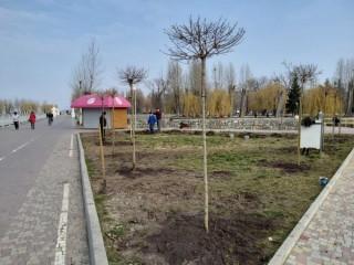 dereva-park-shevchenka-20-03-2020-1