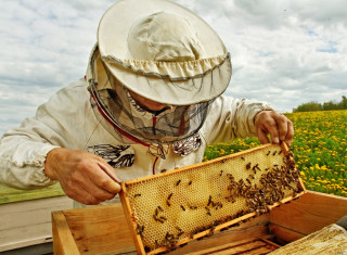 Bee keeper lifting shelf out of hive