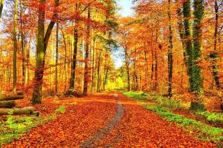 1569485788_golden-autumn-3651134_960_720